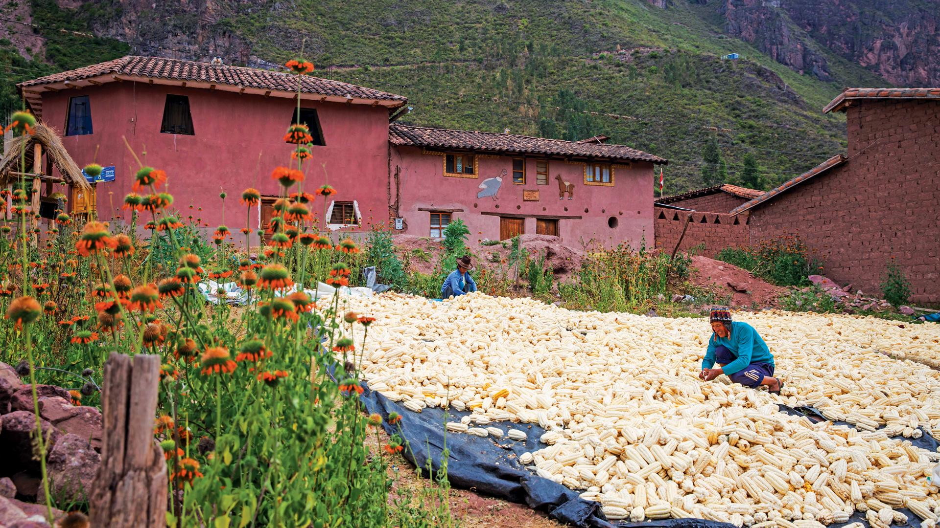 Parwa community farm, Peru