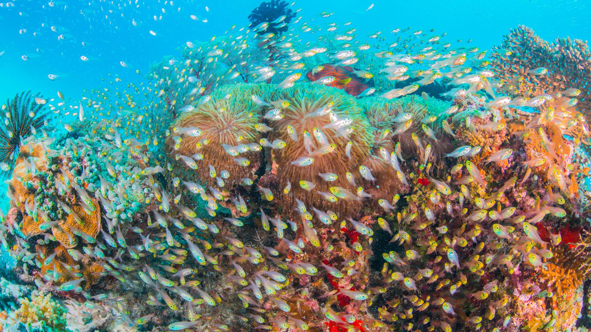 The best snorkel spots around the world