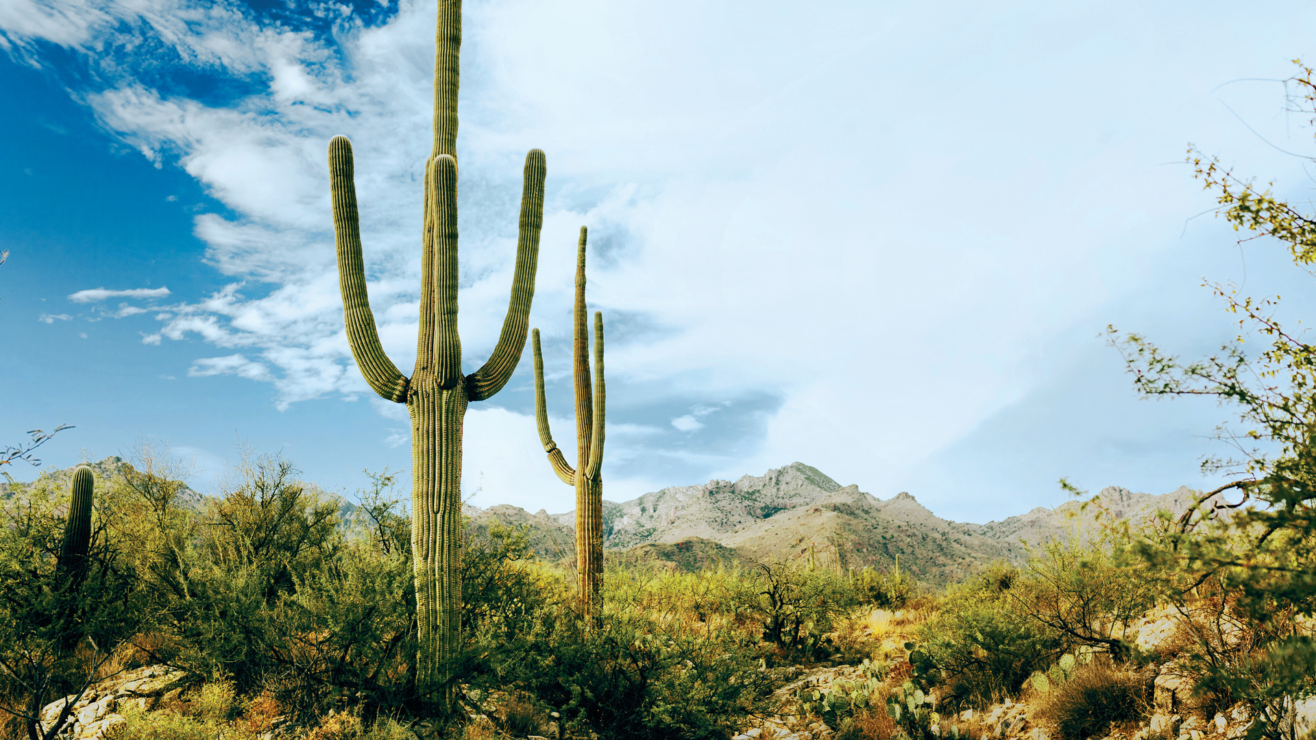Tucson, Arizona, a UNESCO City of Gastronomy