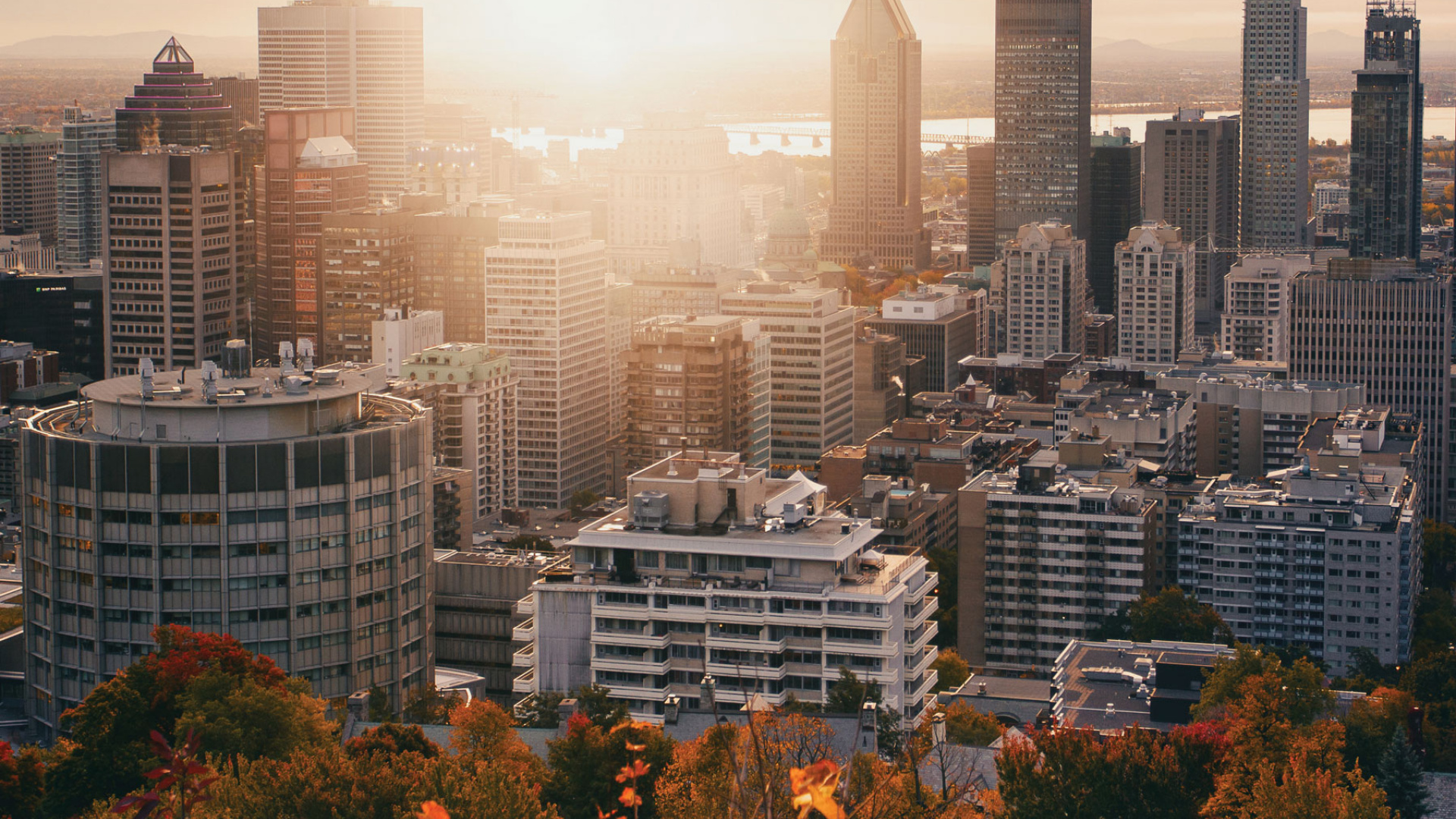 The best things to do and eat in Montreal | View from Mount Royal in the fall