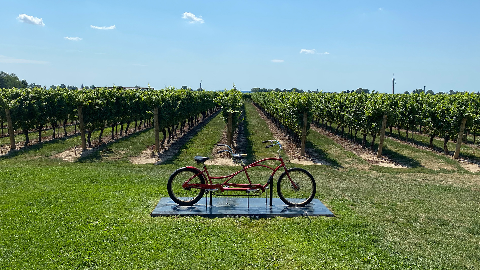 The best wineries in Niagara-on-the-Lake | A bicycle in front of the vines at Jackson-Triggs Winery
