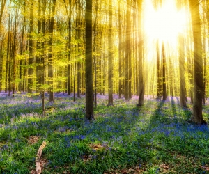 Hot Shots: Hallerbos Forest