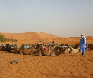 Trekking through the Sahara Desert by camel