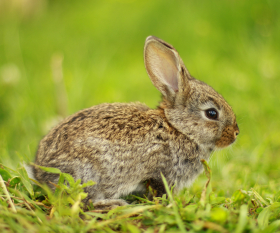 Easter Bunny repatriates German tourists stranded abroad