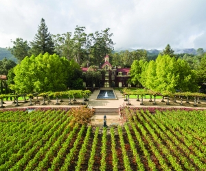 napa-valley-wine-guide