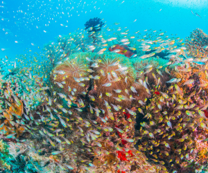 The best snorkel spots around the world